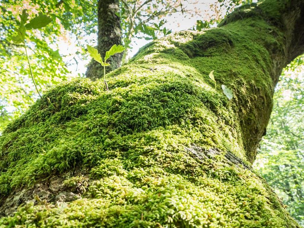 Green. #picosdeeuropa #valdeón #senderismo #olympus #olympusomd #photography