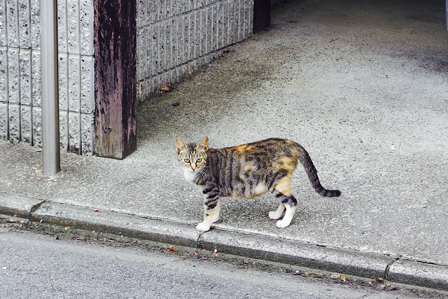 Today's Cat@2017-07-27