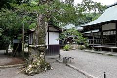Photo:Old tree at Niikawa Shrine (新川神社) By Greg Peterson in Japan