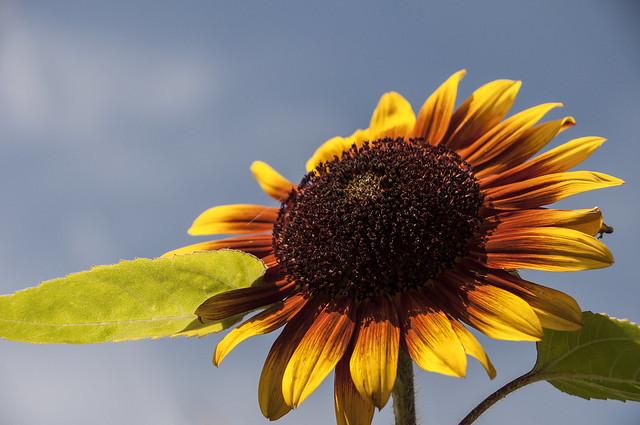 Sunny Thursday, Nikon D90, AF-S DX Nikkor 18-300mm f/3.5-6.3G ED VR