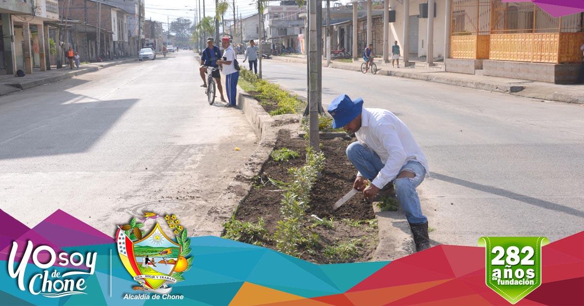 Realizan limpieza de bordillos y parterres en regenerada avenida 14 de Agosto