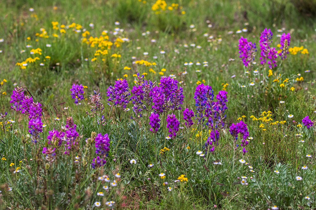 Flowers-11-7D2-081117