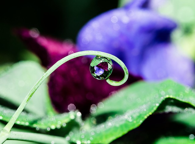 Water droplets...natures jewels
