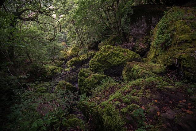 Welcome to the jungle, Nikon D610, AF-S Nikkor 18-35mm f/3.5-4.5G ED