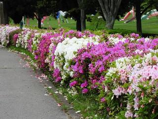 昭和の森 1 花々 12