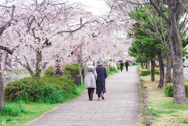 十年,京都四季 | 卷五 | 京都與我,有時還有關西 | 01