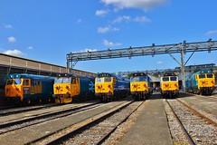 Class 50 lineup - OOC