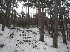 IMG_8543 Weg zur Ruine Rauheneck, 24.1.2010