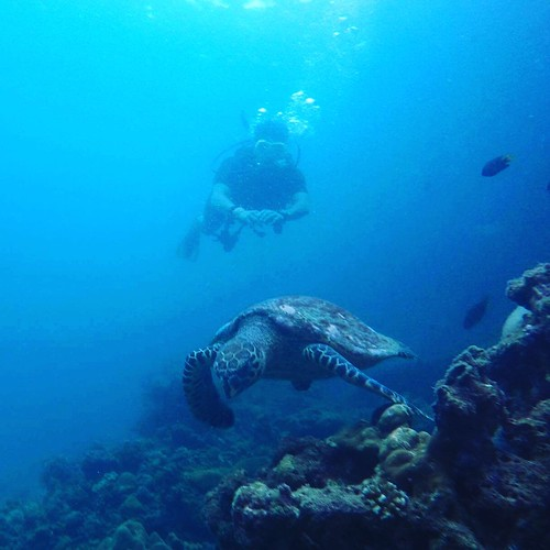 Will Rosencrans '19 (majoring in Physics) with a green sea turtle during a dive at Phi Phi Island during Singapore exchange fall 2017