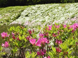 昭和の森 1 花々 01