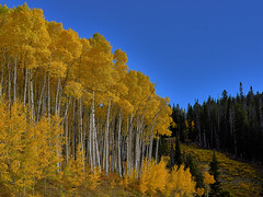 Colorful Autumn in the Rocky Mountains