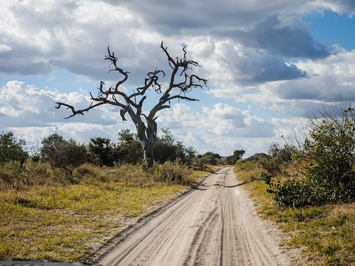 hiver botswana juillet paysage chobe réservenature nature northwestdistrict bw