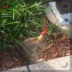 bunnyWhispers [shhhh!]