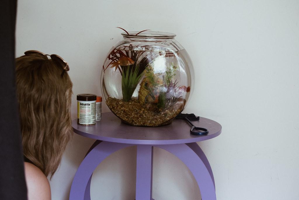 sothekidswentshoppingandbreanngotfish08082017-0560