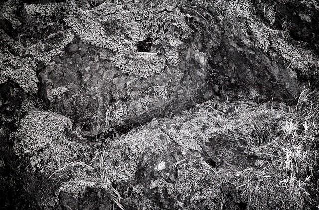 were lichen