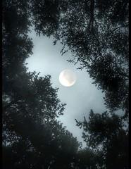 Kodaiii #click #moon #winter #snow #cold #holidays #rain  #snowing #blizzard #snowflakes #wintertime #staywarm #cloudy #instawinter #instagood #holidayseason #photooftheday #season #seasons #nature