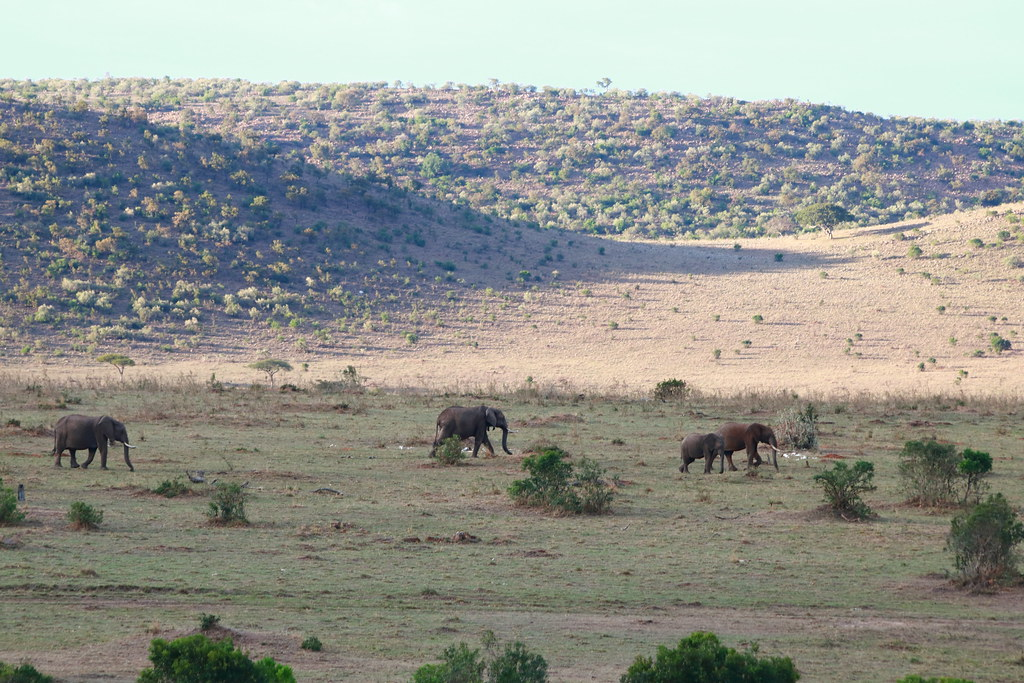 Elephants, Mara
