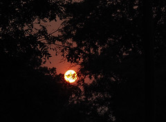 Smoky sun through the trees