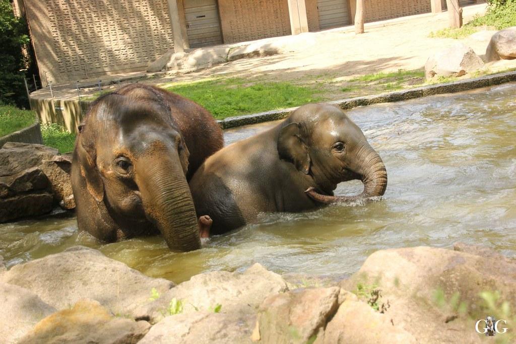 Besuch Zoo Berlin 20.07.201719