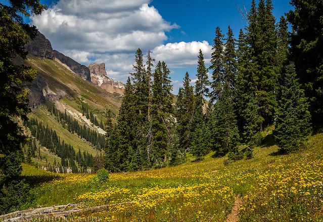 Trail Through Wildflowers