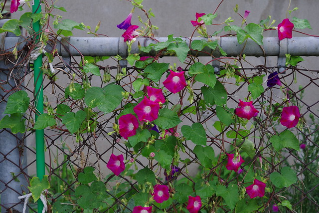 Bloom on the net
