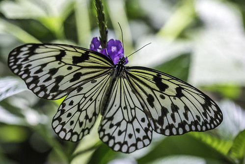august harriscounty houston houstonmuseumofnaturalscience texas usa animal butterfly green image macro photo photograph f35 mabrycampbell july 2017 july292017 20170729campbellh6a6277 100mm ¹⁄₅₀₀sec 100 ef100mmf28lmacroisusm