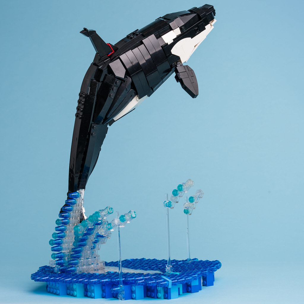 5 Killer whale