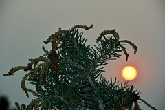 Spruce Tree and Smoky Sunset