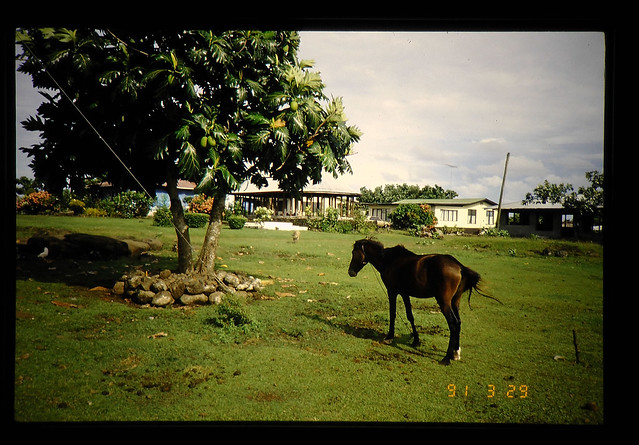 Photo:Agricultural Research And The Rural Views In Agriuculture Of  Western Samoa(1) = 西サモアの農業研究と農業の風景(1) By JIRCAS