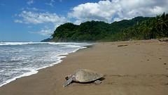 Черепашьи волонтеры в Коста-Рике: полезный отдых на побережье