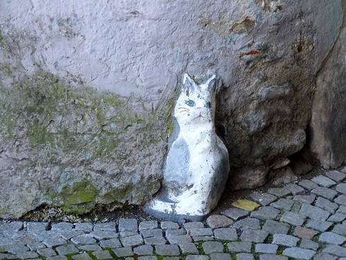 Gmünd in Kärnten - Cat