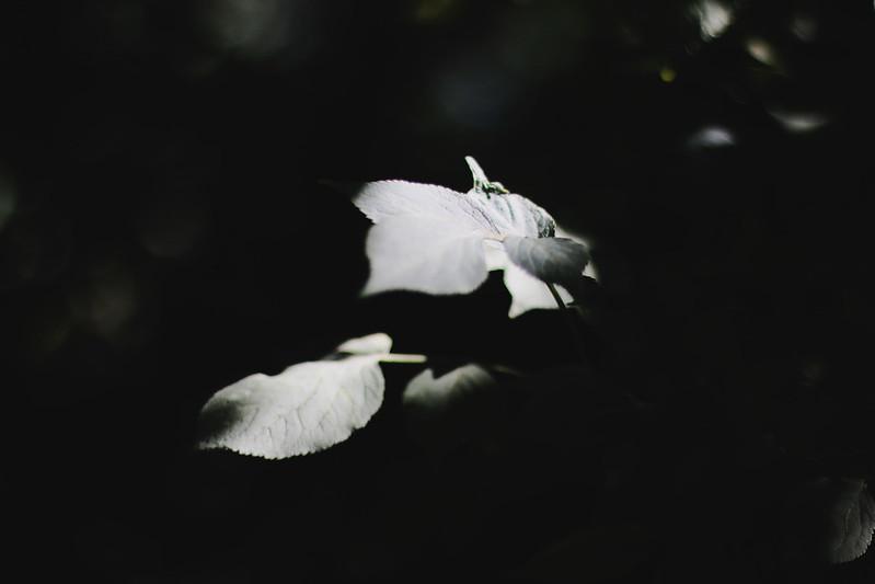 IMG_1906