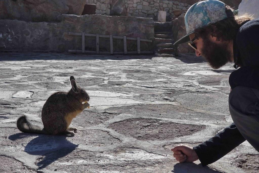Viscacha et Flo