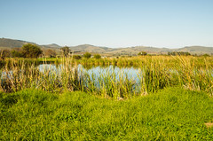 2017 SA Stellenbosch farm
