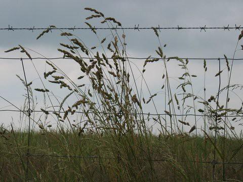12 grass fence