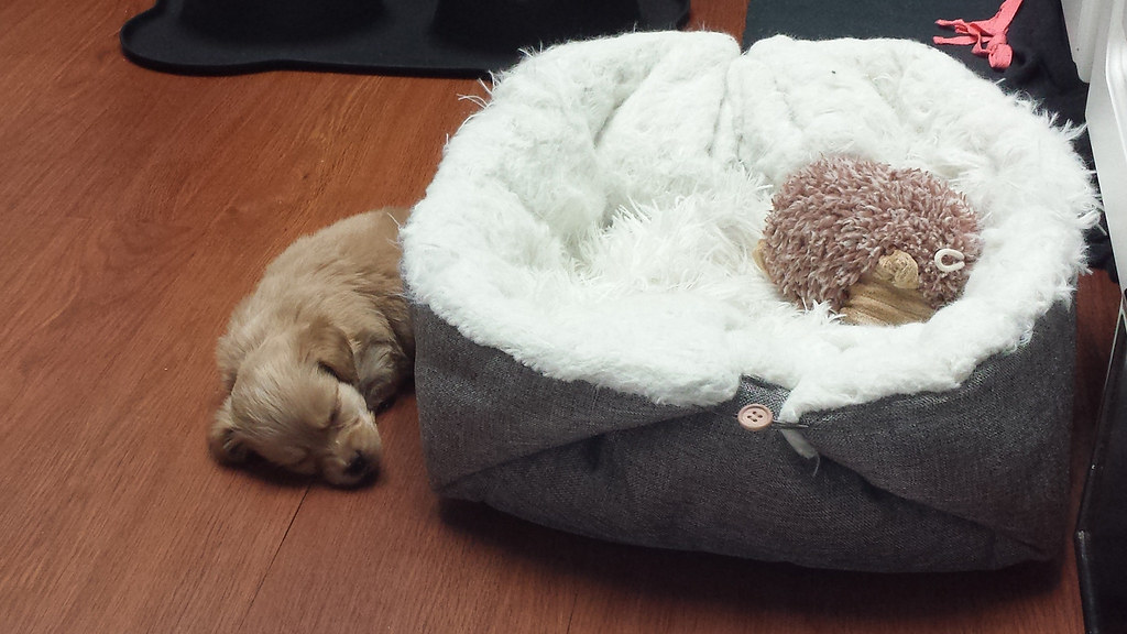 Toasty doesn't know how to use his bed