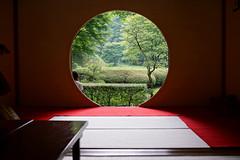 Glorious Zen Garden