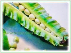 Edible seeds of Psophocarpus tetragonolobus (Four-angled Bean, Winged Bean/Pea, Princess/Asparagus Pea, Manila/Goa Bean, Kacang Botol in Malay), 28 Sept 2017