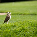 International Birds of Prey Centre (61)