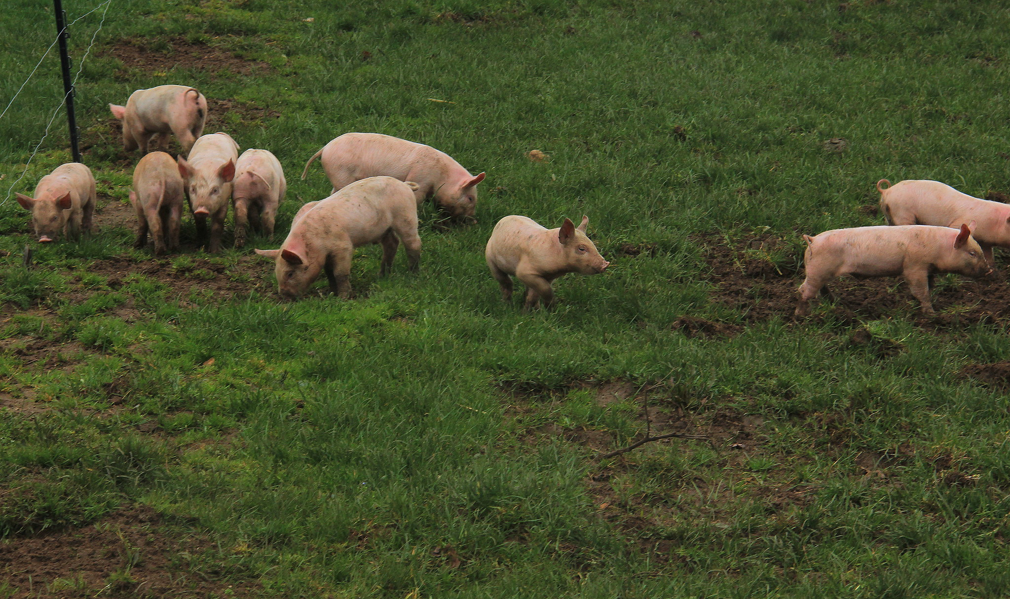 Spring in Dordogne makes farms come alive with newborn animals