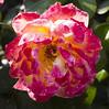 Botanic Gardens-026