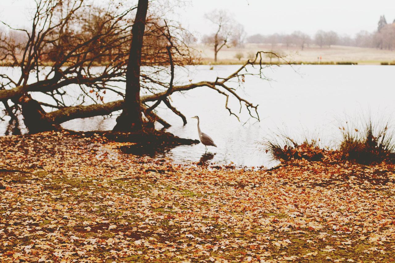 Autumn In Retrospect