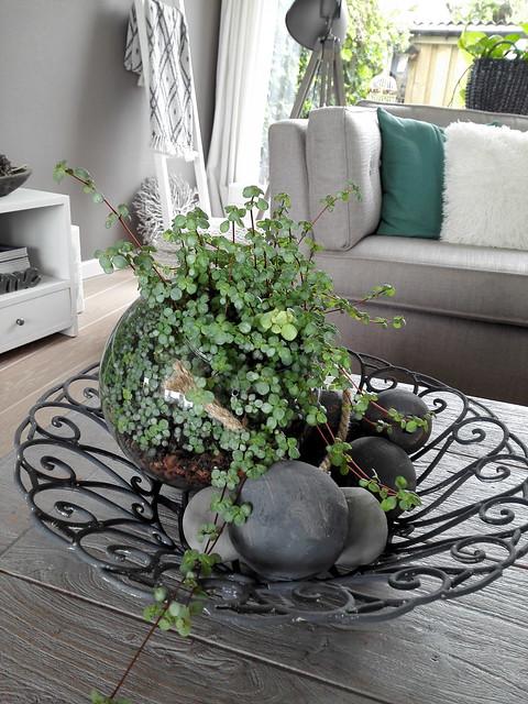 Schaal met plant salontafel