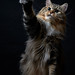 cat by 428sr