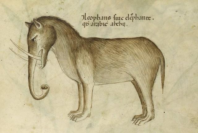 elephas2