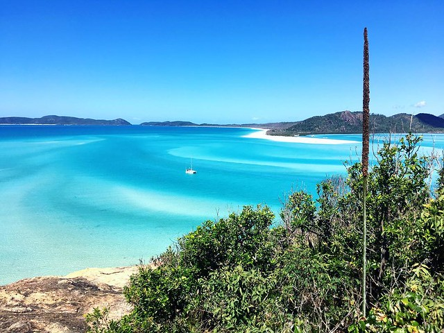 166/365 • the view from the lookout - out of sight to the right is Hill Inlet where we've been for the last five days *heavenly* - straight ahead is Whitehaven Beach • . #whitsundayisland #hillinlet #wwsa #sailing #queensland #abcmyphoto #bellalunaboat #c