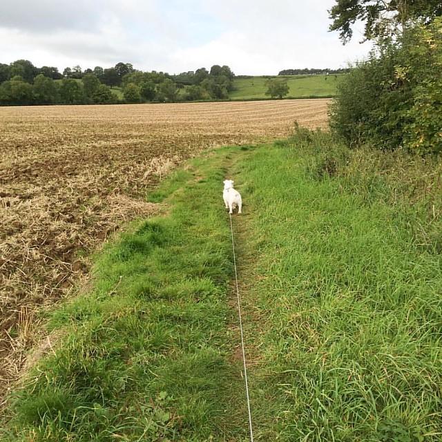 Small white dog #oftheday #dogwalkingduty