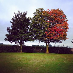 A tree of two halves
