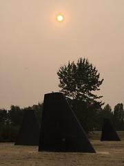 Fins under a smoky sun