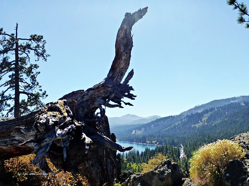 bäume baumstamm berge mountains laketahoe lake california nevada natur naturre outdoor berg see usa